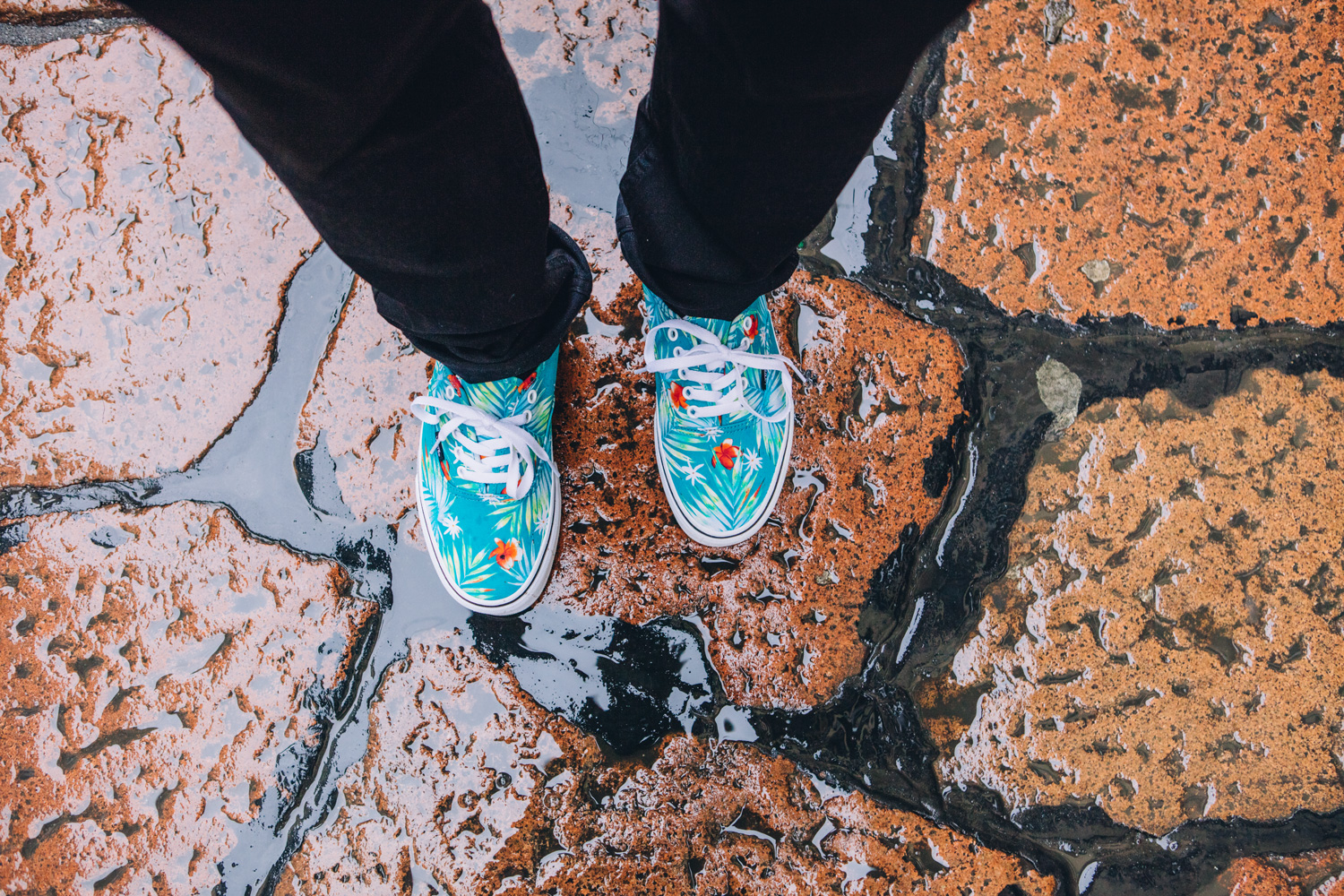 vans palms collection